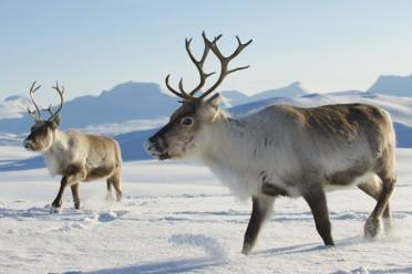 Avventure a Rovaniemi